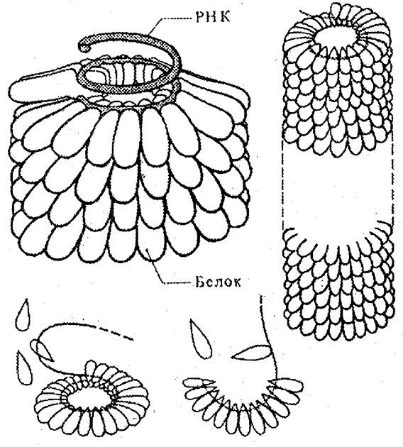 Схема строения кристалла