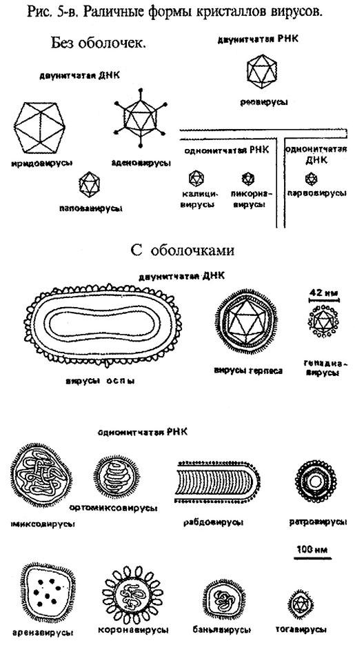 Формы кристаллов вирусов
